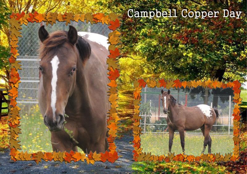 Mes petits montages photo!! - Page 2 Campbe14