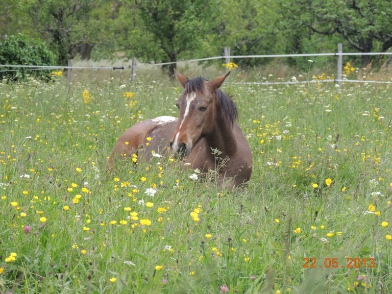 CONCOURS PHOTO : Les chevaux paresseux... Choomy10