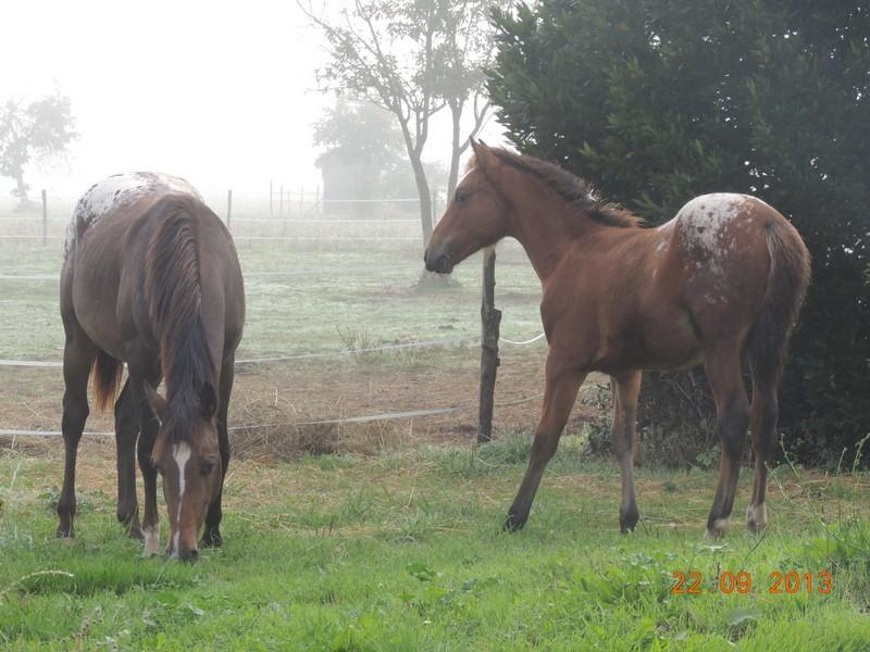 Mes chevaux, un mélange d'un peu tout le monde! - Page 8 Choomy23