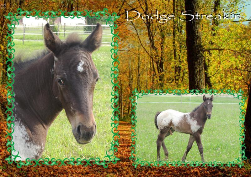 Mes petits montages photo!! - Page 2 Dodge_10