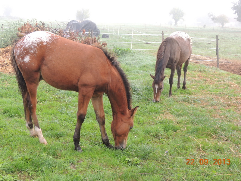 Mes chevaux, un mélange d'un peu tout le monde! - Page 8 Dynami39