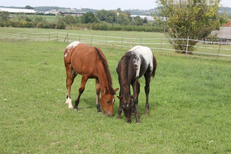 Mes chevaux, un mélange d'un peu tout le monde! - Page 8 Dynami50