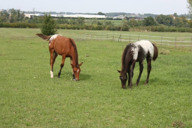 Mes chevaux, un mélange d'un peu tout le monde! - Page 8 Dynami51