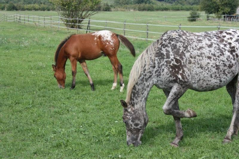 Mes chevaux, un mélange d'un peu tout le monde! - Page 8 Dynami52