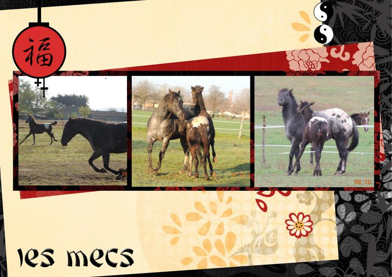 Mes petits montages photo!! - Page 2 Groupa10