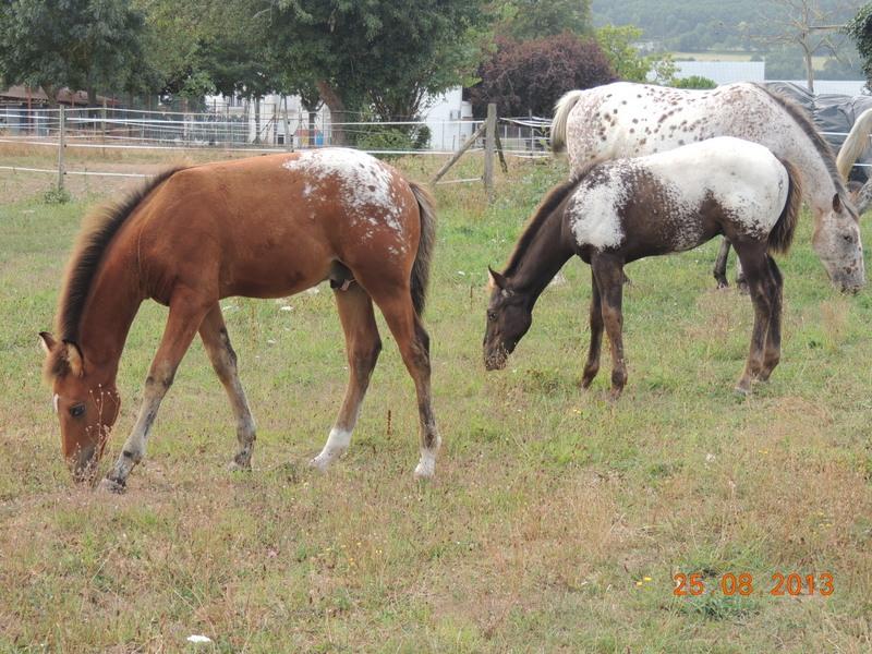 Mes chevaux, un mélange d'un peu tout le monde! - Page 7 Groupe11