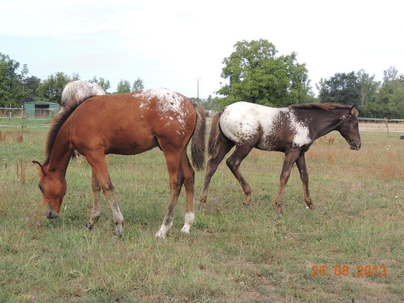 Mes chevaux, un mélange d'un peu tout le monde! - Page 7 Groupe15