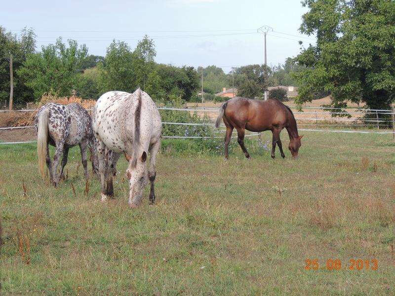 Mes chevaux, un mélange d'un peu tout le monde! - Page 7 Groupe16