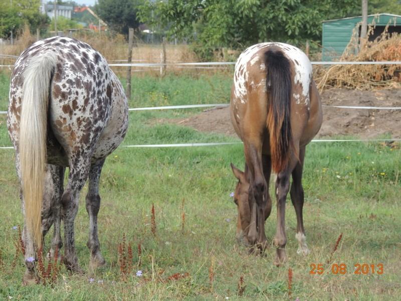Mes chevaux, un mélange d'un peu tout le monde! - Page 7 Groupe17
