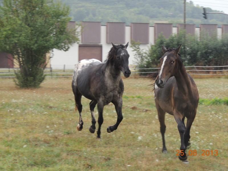 Mes chevaux, un mélange d'un peu tout le monde! - Page 7 Groupe18