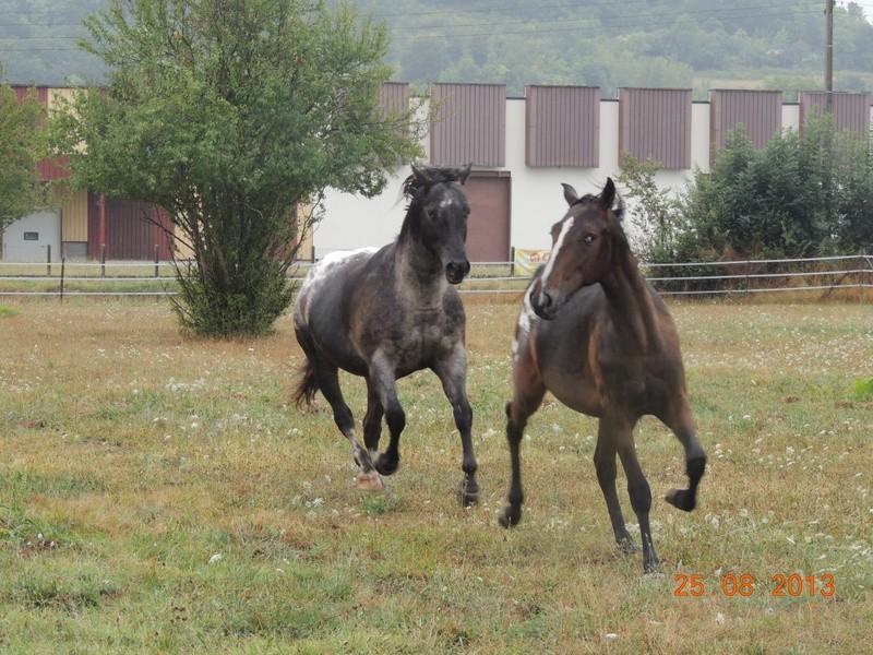 Mes chevaux, un mélange d'un peu tout le monde! - Page 7 Groupe19