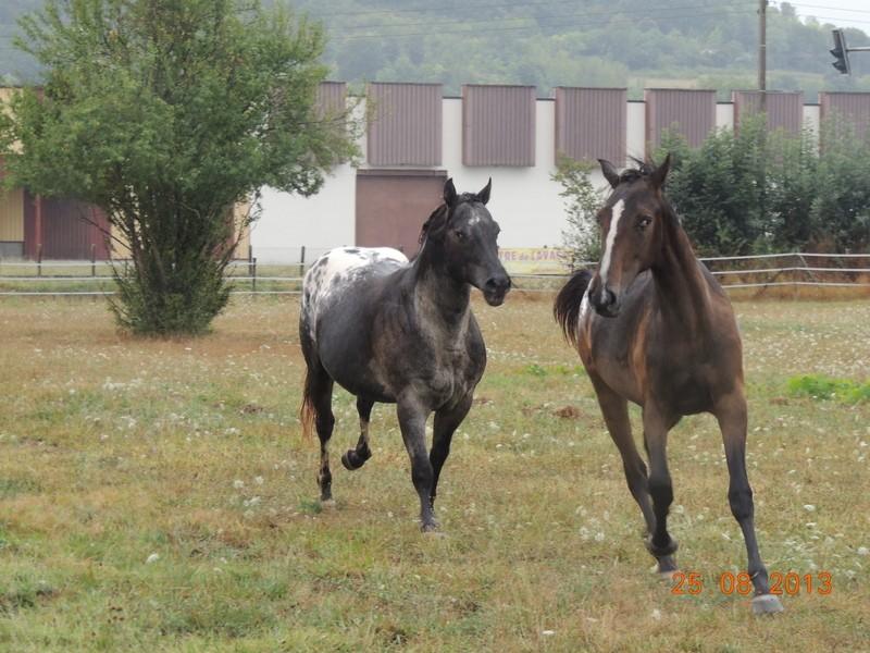 Mes chevaux, un mélange d'un peu tout le monde! - Page 7 Groupe20
