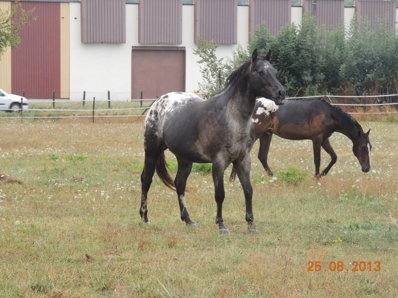 Mes chevaux, un mélange d'un peu tout le monde! - Page 7 Groupe24