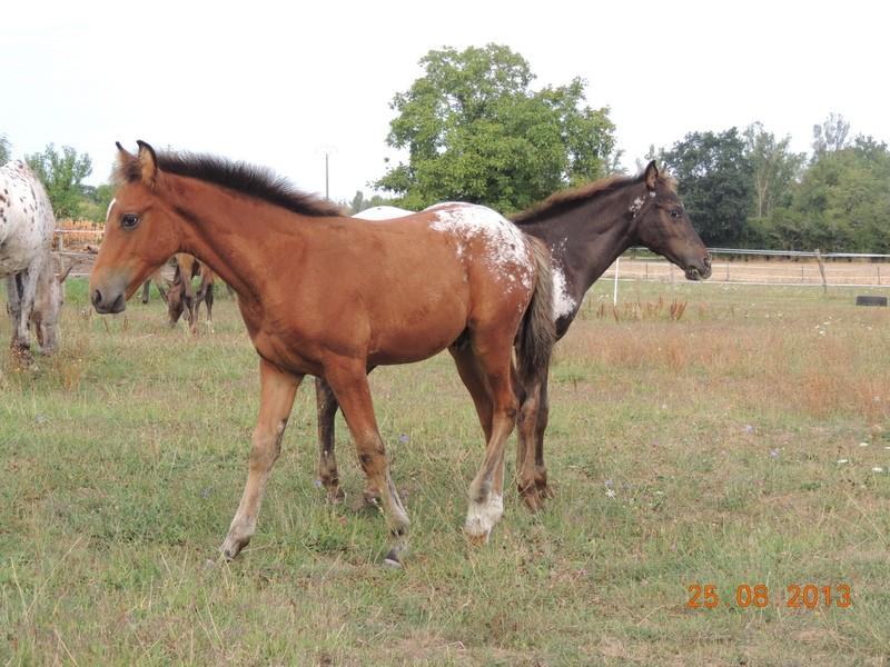 Mes chevaux, un mélange d'un peu tout le monde! - Page 7 Groupe25
