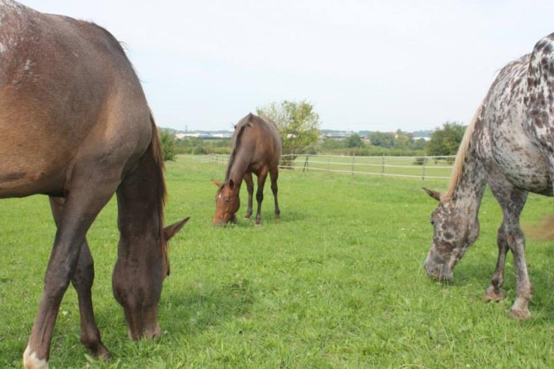 Mes chevaux, un mélange d'un peu tout le monde! - Page 8 Groupe26