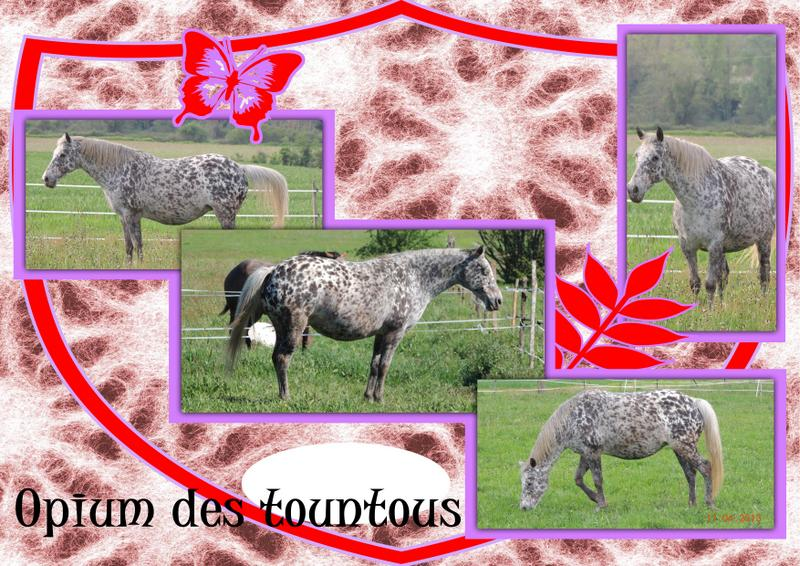 Mes petits montages photo!! - Page 2 Opium_16