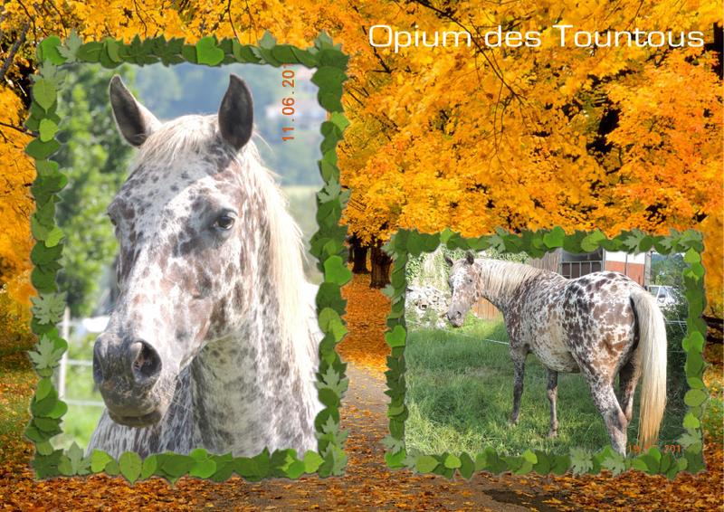 Mes petits montages photo!! - Page 2 Opium_18