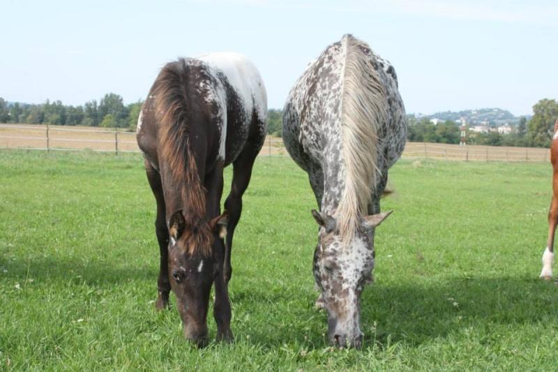 Mes chevaux, un mélange d'un peu tout le monde! - Page 8 Opium_37