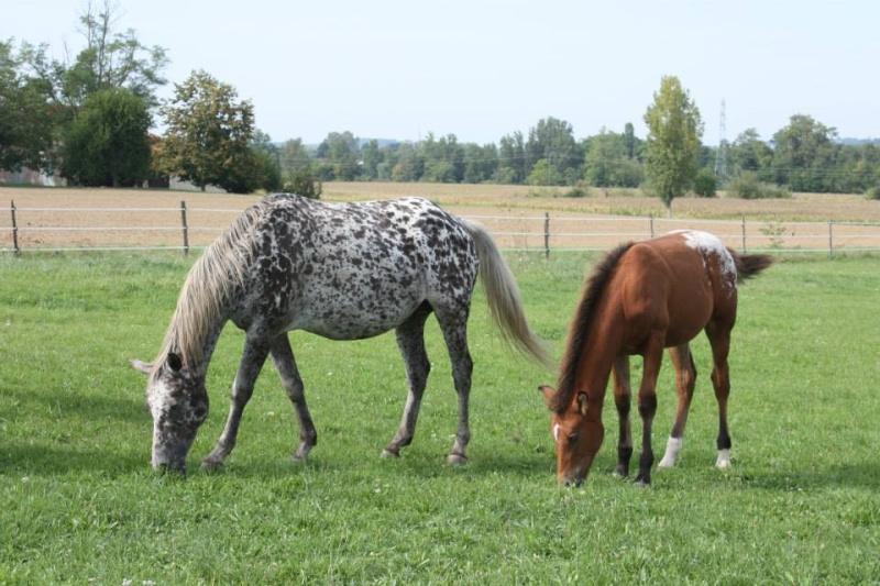 Mes chevaux, un mélange d'un peu tout le monde! - Page 8 Opium_38