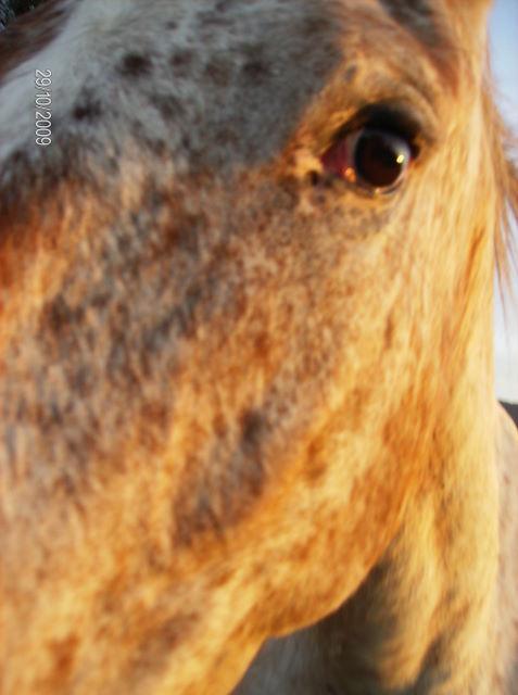 CONCOURS PHOTOS, L'oeil des chevaux ! Quarin11