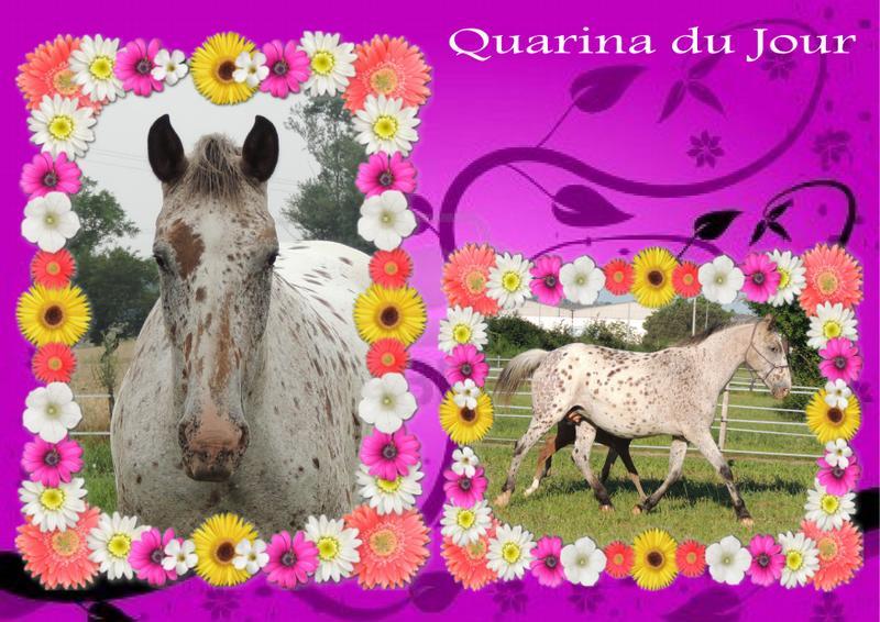 Mes petits montages photo!! - Page 2 Quarin13