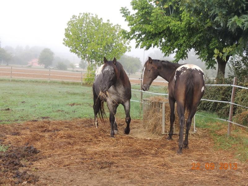 Mes chevaux, un mélange d'un peu tout le monde! - Page 8 Undy_e10