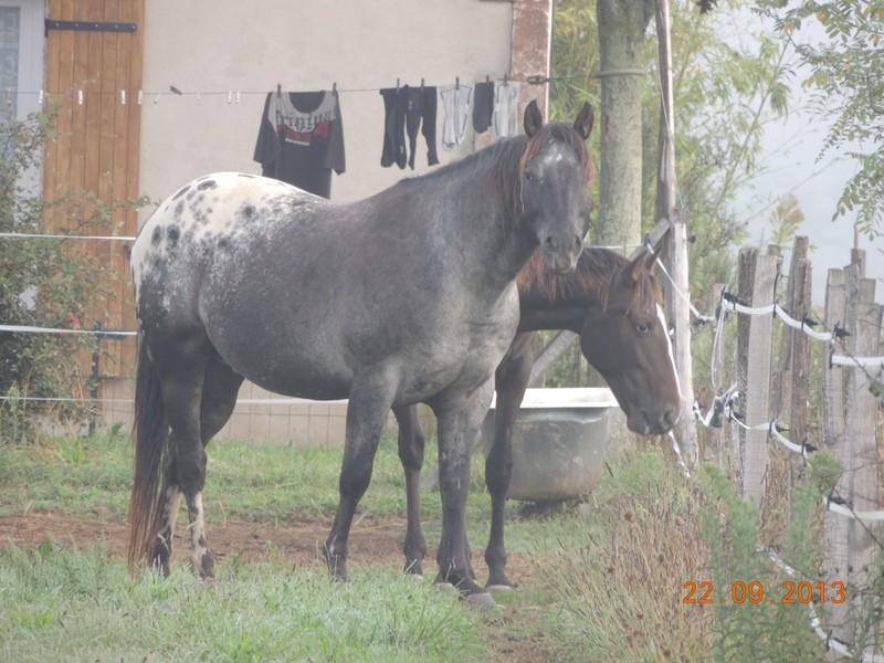 Mes chevaux, un mélange d'un peu tout le monde! - Page 8 Undy_e11