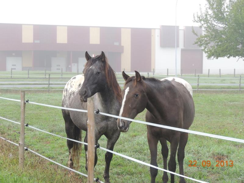 Mes chevaux, un mélange d'un peu tout le monde! - Page 8 Undy_e12