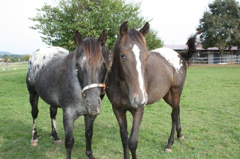 Mes chevaux, un mélange d'un peu tout le monde! - Page 8 Undy_e13
