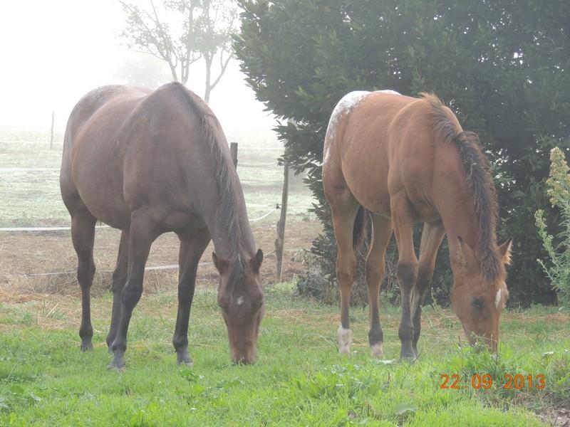 Mes chevaux, un mélange d'un peu tout le monde! - Page 8 Uppy_e10