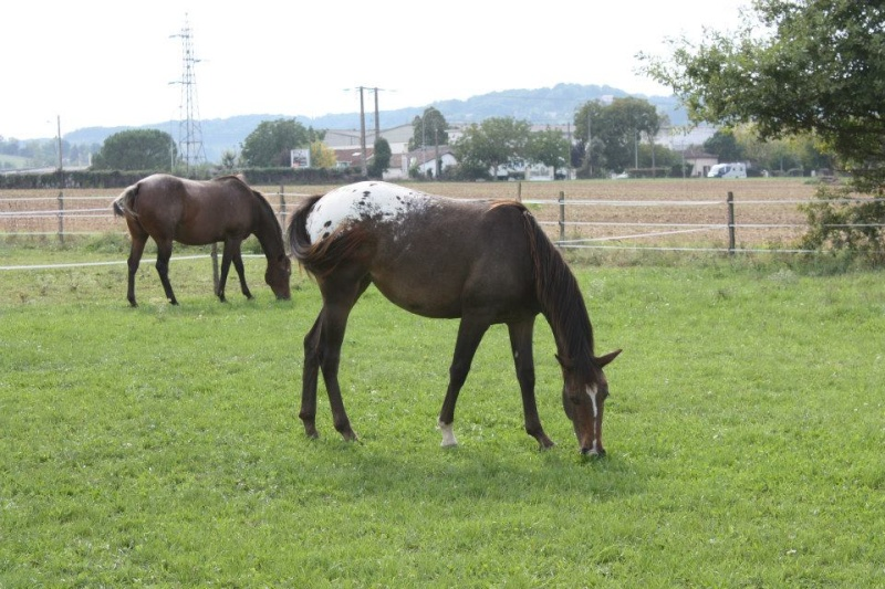 Mes chevaux, un mélange d'un peu tout le monde! - Page 8 Uppy_e12
