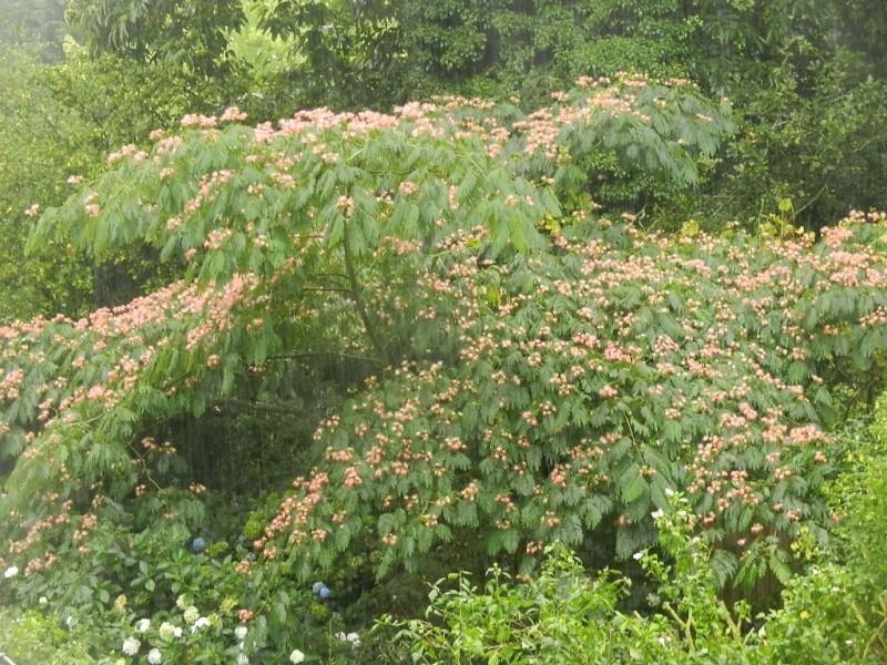 floraisons des arbres et des arbustes - Page 6 01510