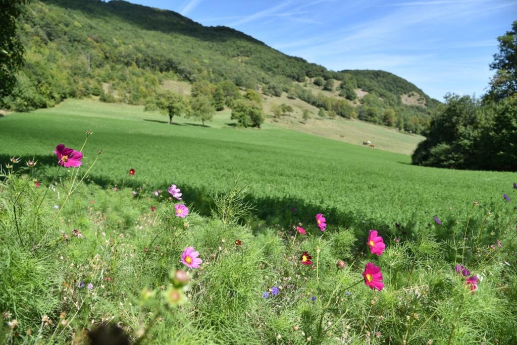 Pension pré/paddocks avec abri avec carrière - 25 mn de Grenoble - 10 mn de vif 11m10