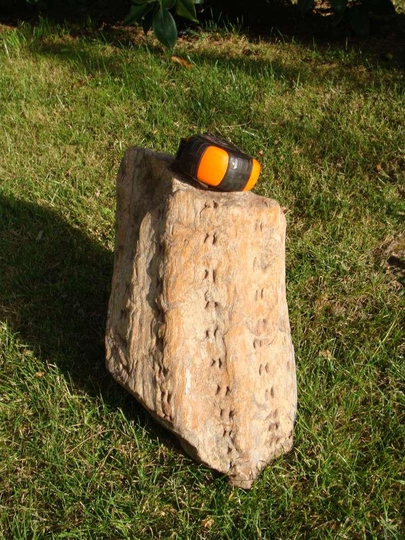 Sauvez les troncs ! Dsc03310
