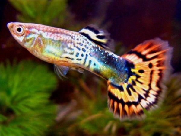 Аквариум - рыбки - растения  Dnddd_10