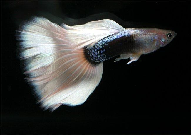 Аквариум - рыбки - растения  Dnddd_11
