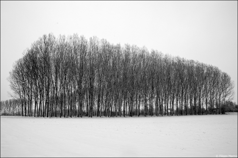 domenica nevosa e due foto paesaggio Bianco/Nero Dsc_1714