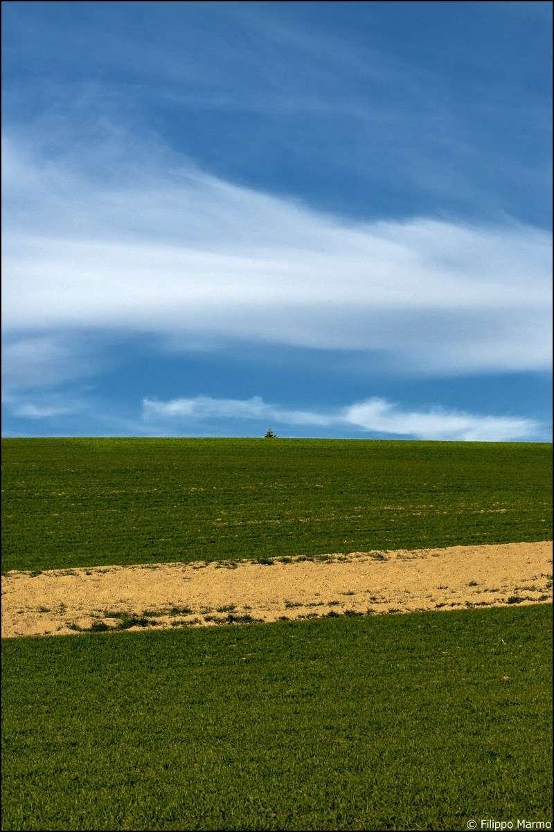 un po di primavera e di paesaggio  Dsc_3011