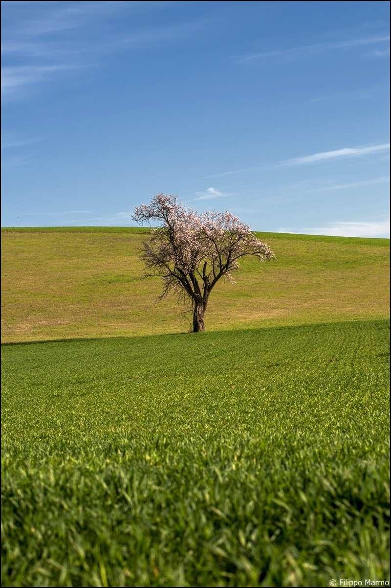 un po di primavera e di paesaggio  Dsc_3013