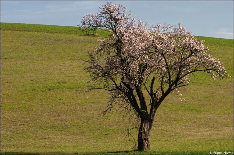 un po di primavera e di paesaggio  Dsc_3014