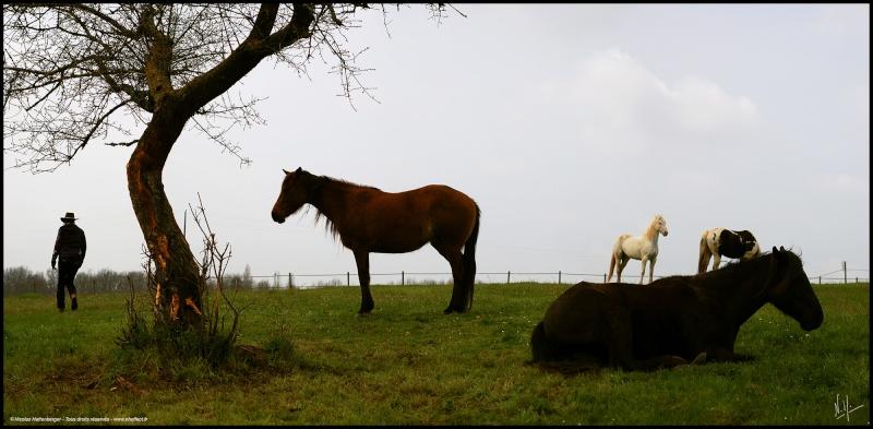 CONCOURS PHOTO : Les chevaux paresseux... Panora10