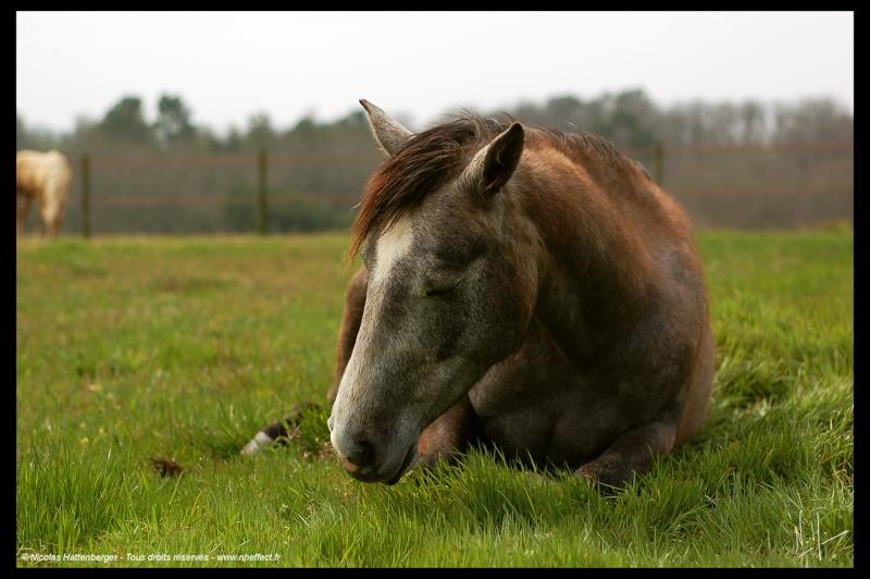 CONCOURS PHOTO : Les chevaux paresseux... Paunat10