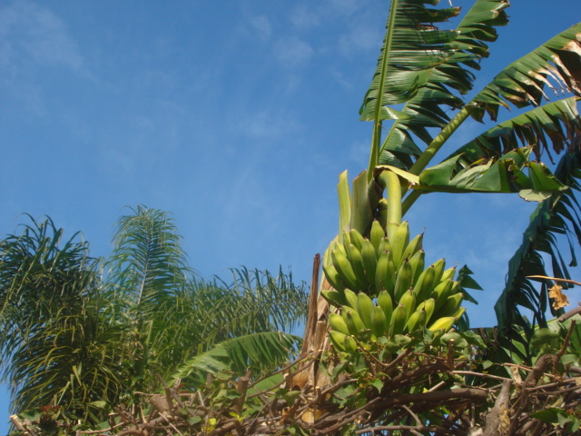 Jardin de Tropicana : Maroc /Casablanca - Page 2 Regime10