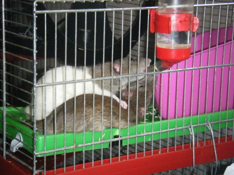 Sauvetage des 7 petits ratons - Page 2 Dscf7116