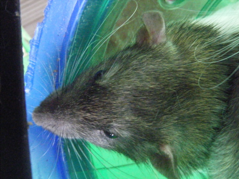 Sauvetage des 7 petits ratons - Page 2 Dscf7121