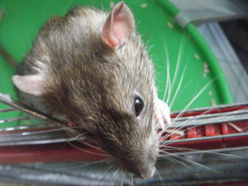 Sauvetage des 7 petits ratons - Page 2 Dscf7122