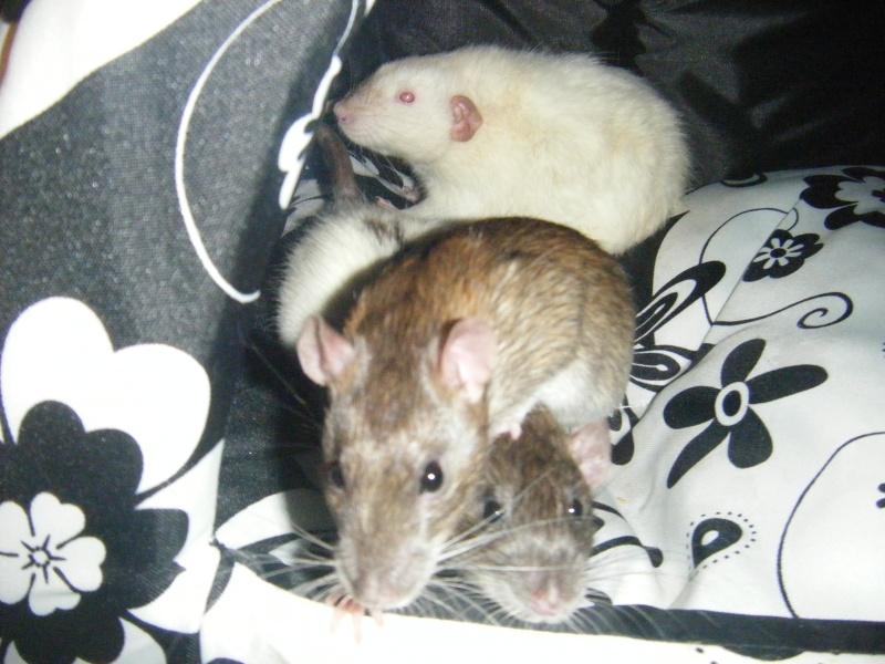 Sauvetage des 7 petits ratons - Page 2 Dscf7124