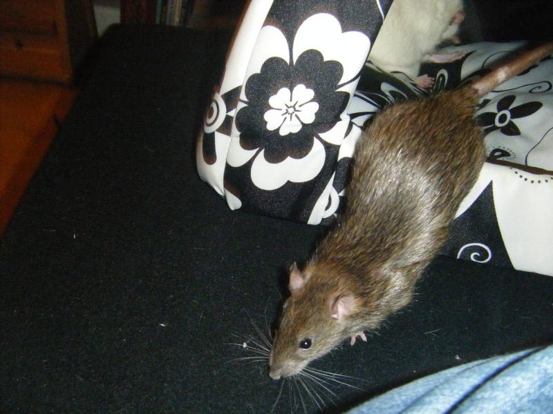 Sauvetage des 7 petits ratons - Page 2 Dscf7126