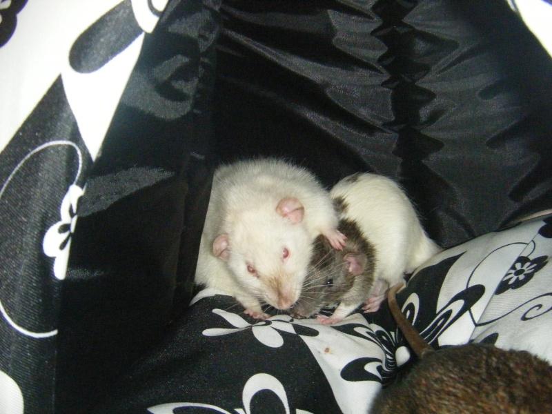 Sauvetage des 7 petits ratons - Page 2 Dscf7128