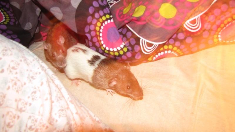 Sauvetage des 7 petits ratons - Page 2 Img_0011